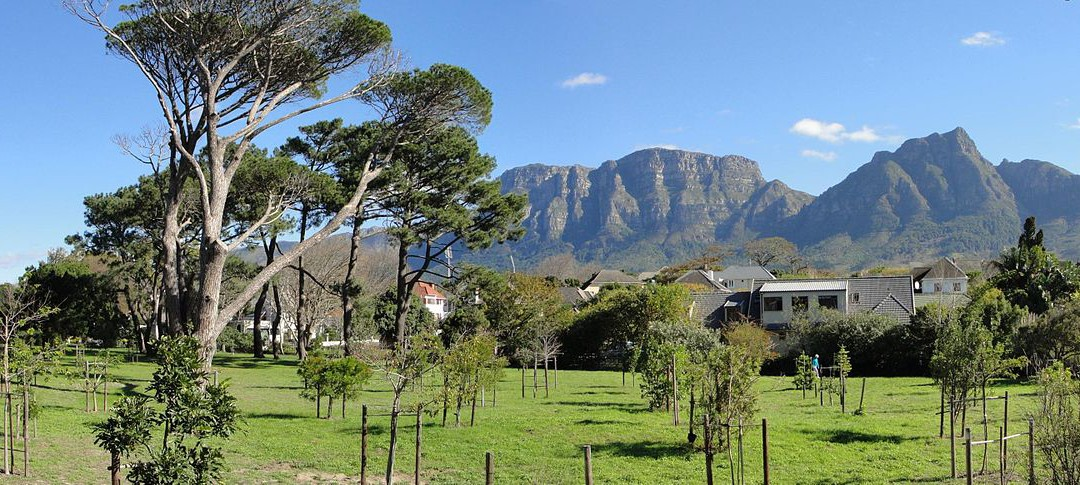 5 Green Places to Play in Cape Town